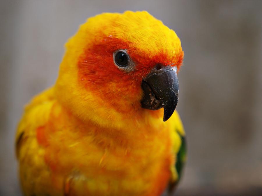 Friskney: Parrots, UK, 2008 - Photo #03